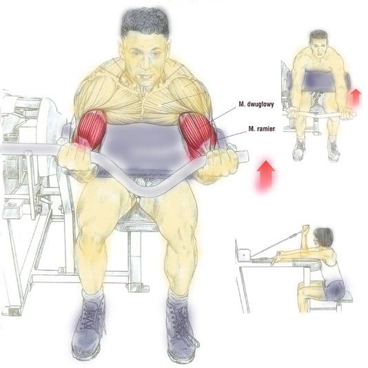 Ćwiczenie na mięsień dwugłowy (biceps) na atlasie z modlitewnikiem