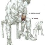 Zginanie przedramion (biceps) ze sztangielkami - łokieć wsparty na udzie