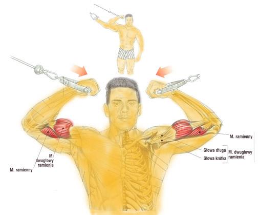Trening bicepsa (dwugłowy ramienia) na wyciągu górnym