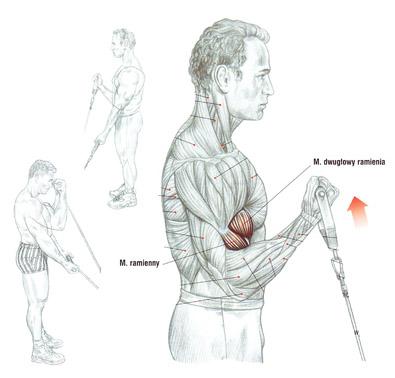 Trening przedramion (biceps) z wykorzystaniem wyciągu dolnego