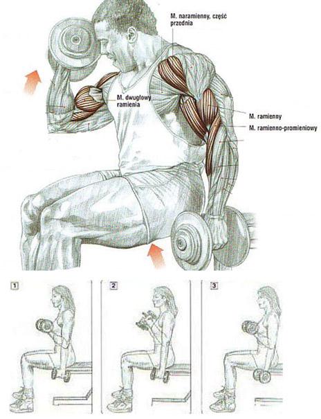 Trening przedramion (biceps) ze sztangielkami z obrotem