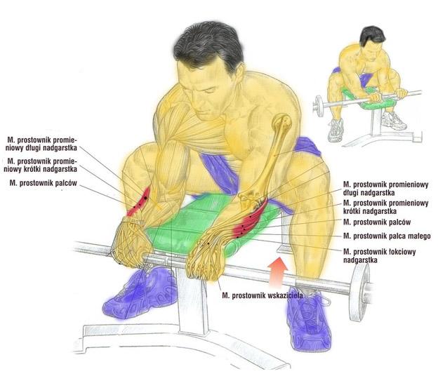 Prostowanie nadgarstków sztangą (nachwytem)