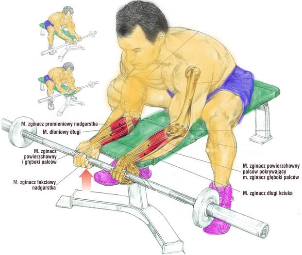 Trening nadgarstków sztangą (podchwytem)