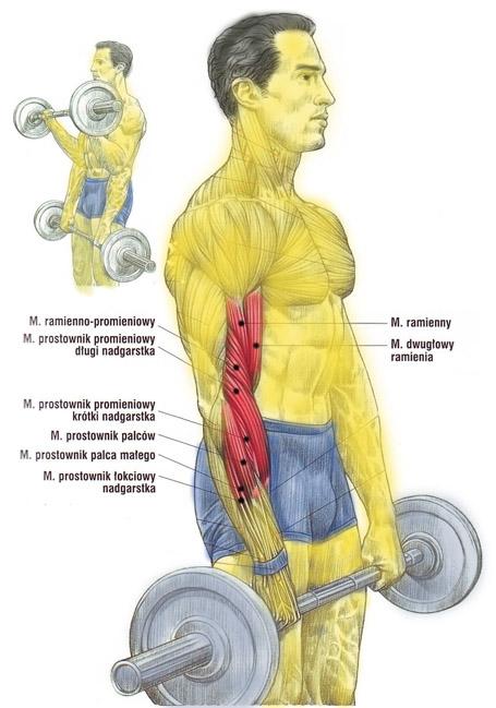 Trening przedramion sztangą (nachwyt)