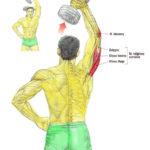 Trening tricepsa w pionie ze sztangielkami