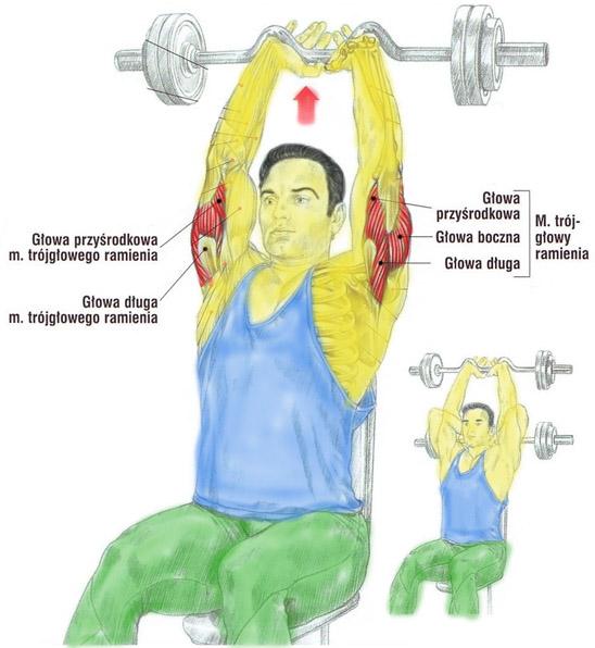 Trening tricepsa sztangą w pozycji siedzącej