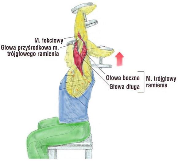 Trening tricepsa sztangielką trzymaną oburącz na siedząco
