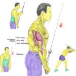 Trening - trójgłowy ramienia na wyciągu górnym (triceps)