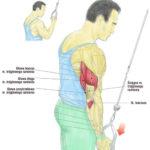 Prostowanie przedramion na wyciągu górnym (triceps - podchwytem)