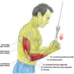 Trening tricepsa na wyciągu górnym (podchwytem)