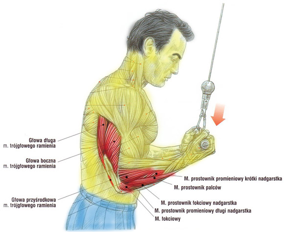 triceps-wyciag-podchwyt