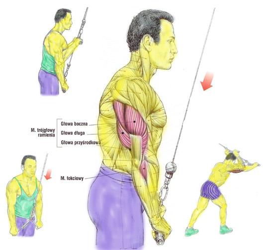 Trening – trójgłowy ramienia na wyciągu górnym (triceps)