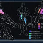 Unoszenie kolan w siadzie - Kinezjologia