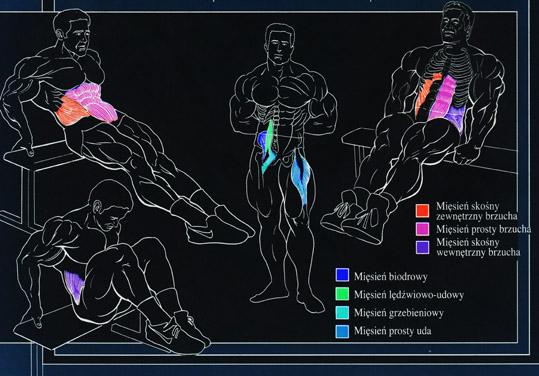 Unoszenie kolan w siadzie – Kinezjologia