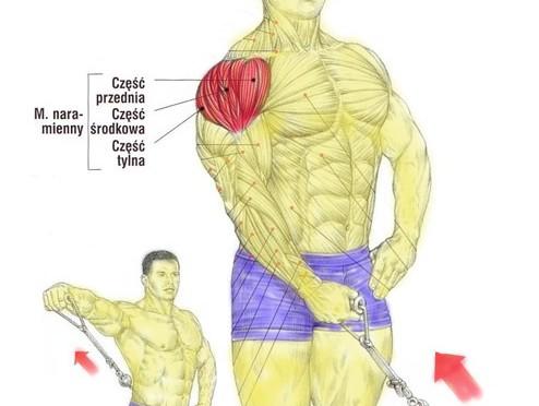 Unoszenie ramion w bok na wyciągu dolnym