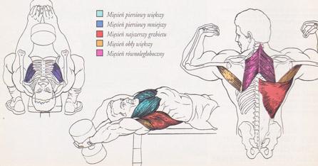 Przenoszenie sztangielki zza głowy, leżąc – Teoria