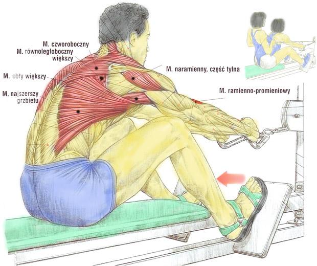 Plecy, grzbiet – przyciąganie rączki wyciągu do klatki na siedząco