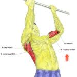 Plecy, grzbiet - podciąganie na drążku podchwytem