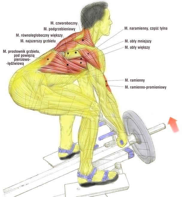 Plecy, grzbiet – podciaganie sztangi T w opadzie tułowia
