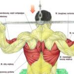 Plecy, grzbiet – ściąganie drążka wyciągu górnego do karku
