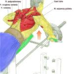 Plecy, grzbiet - podciąganie sztangi T w opadzie z podpórką