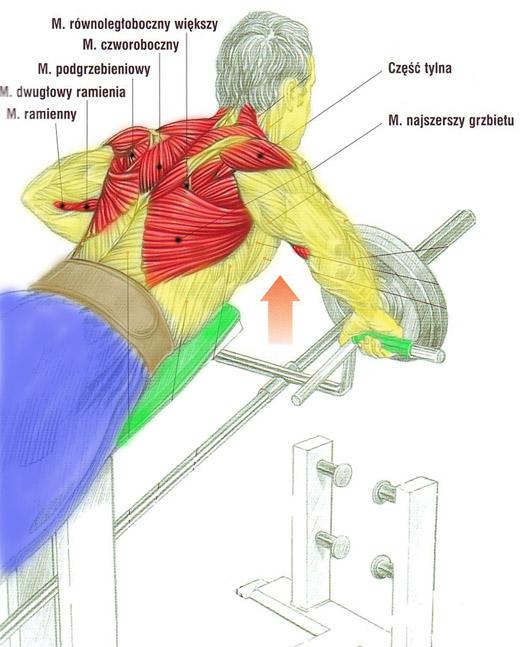 Plecy, grzbiet – podciąganie sztangi T w opadzie z podpórką