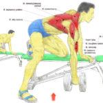 Ćwiczenie na plecy – podciąganie sztangielki w opadzie na ławeczce