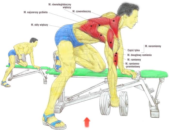 Ćwiczenie na plecy - podciąganie sztangielki w opadzie na ławeczce
