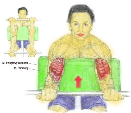 biceps-sztanga-modlitewnik