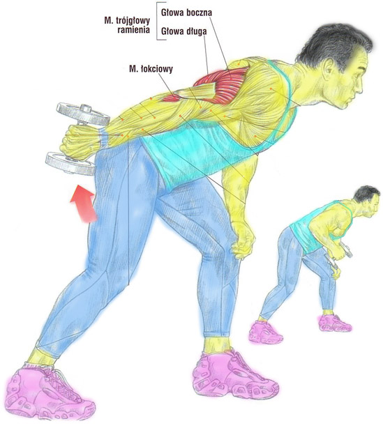 Sposób na masywne tricepsy