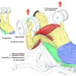 Plan treningowy – DZIEŃ 1  Klatka, ręce i łydki