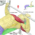 Trening klatki piersiowej – wyciskanie na ławce płaskiej