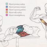 Trening klatki piersiowej - przenoszenie hantli
