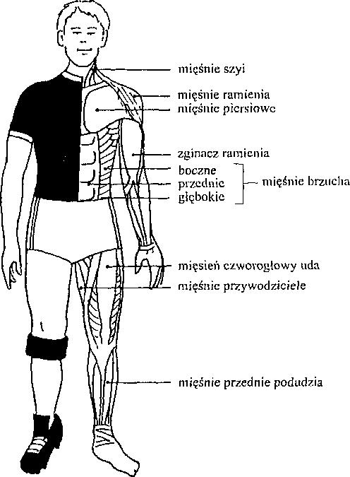 Funkcje mięśnia w piłce nożnej