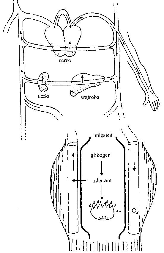 tmp977d-1