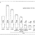 Profile aktywności meczowej